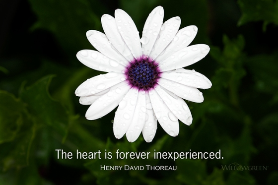 The heart is forever inexperienced. Henry David Thoreau